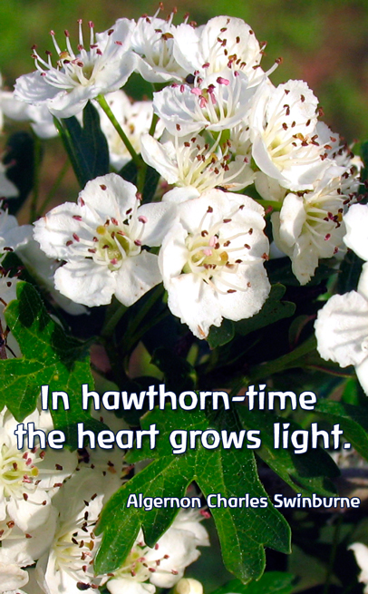 hawthorn-FES