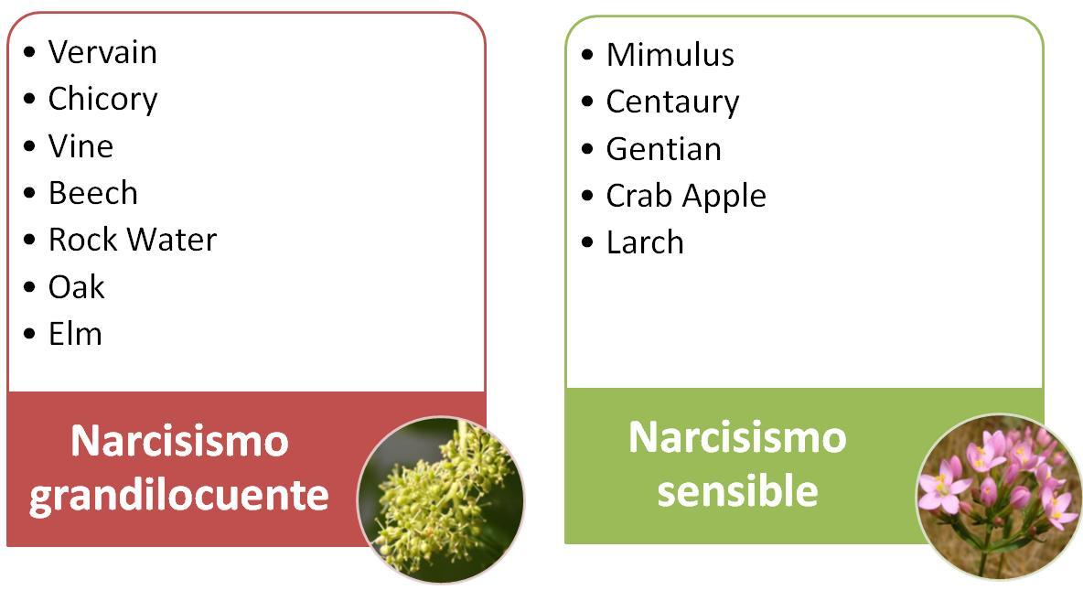 Narcisismo-esencias-florales
