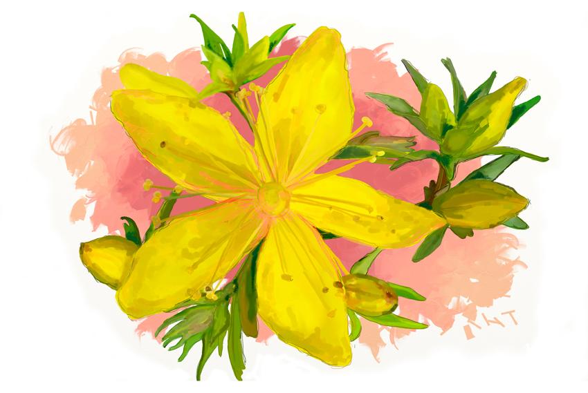"""""""Las esencias florales están destinadas a aquellos de nosotros que verdaderamente desean hacerse responsables de sus estados emocionales, mentales y espirituales"""" (C. Kemp)."""